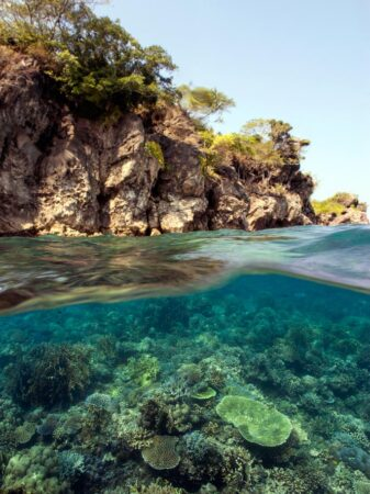 Marine Conservation courses allow to monitor, maintain and restore coral reefs